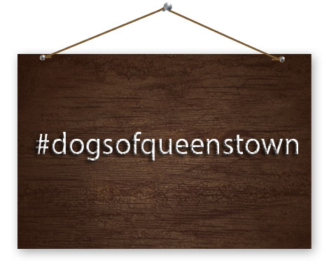 hashtag dogs of queenstown