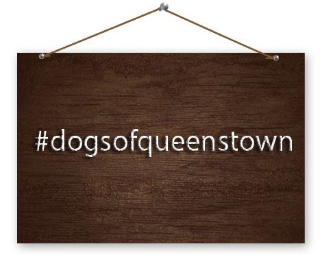 dogsofqueenstown